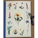 Imagen Carpeta composición plantas