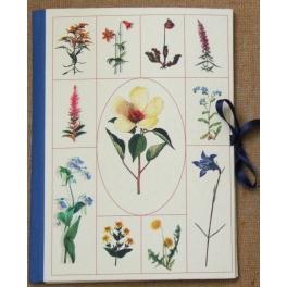 Carpeta composición plantas