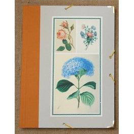 Carpeta gomas plantas