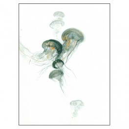 Medusas_7
