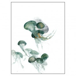 Medusas_12
