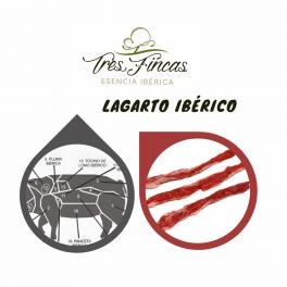 Lagarto ibérico Tres Fincas